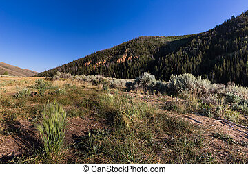 Hills with grass sagebrush and sky - This photo was taken...