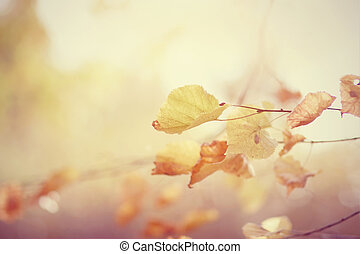 Yellow-gold leaves in the fall. - Yellow-gold leaves of a...