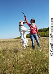 Training - summer, dog, pet, jump, animal, train, labrador,...