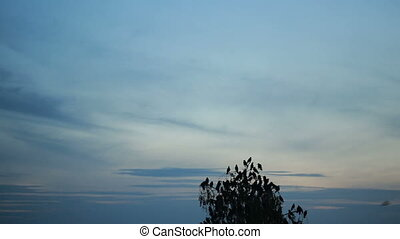 A flock of crows circling in the sky. evening. tree with...