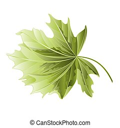 Maple tree leaf vector.eps - Maple tree leaf on a white...