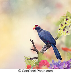 Ross's Turaco perching in the flower garden