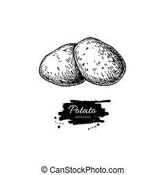 Potato vector drawing. Isolated potatoes heap. Vegetable engrave