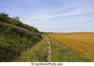farm track with willowherb - a scenic farm track with...