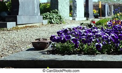 The flowers to the cemetery. In the background can be seen the grave stone. In the background is the church. Camera movement along allows would lead many details.