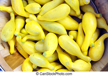 Home Grown Squash - Pile of fresh, home grown squash sit in...
