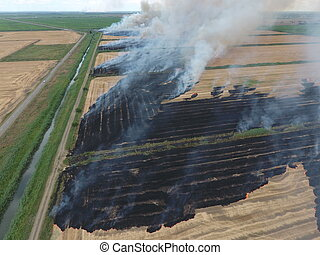 Burning straw in the fields after harvesting wheat crop