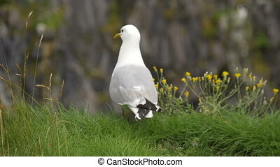 Seagull sitting on the edge of the cliff HD