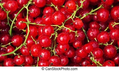 Pile of red currant with stems 4K close up dolly shot - Red...