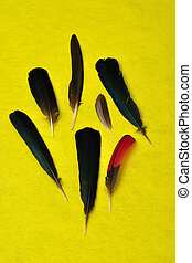 A collection of feathers on a yellow background