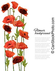 Flower background with poppies. Vector.