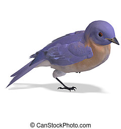 Bird Female Western Bluebird 3D rendering with clipping path...