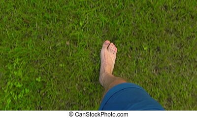 Man walking barefoot on the grass in apple garden, POV. 4K...