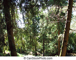 Deciduous and coniferous subtropical forest. Common Trees...