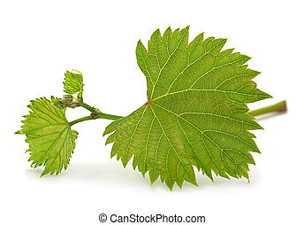 Grape leaf bunch - Green leaf bunch isolated on white