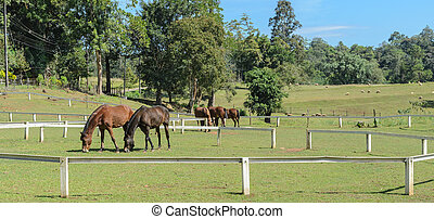 Horse farm, countryside scenery - Horses grazing in a field,...