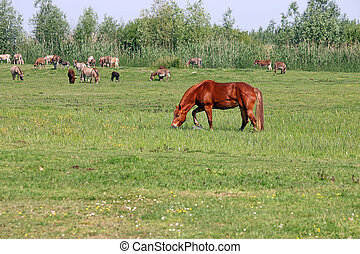 brown horse on pasture summer season