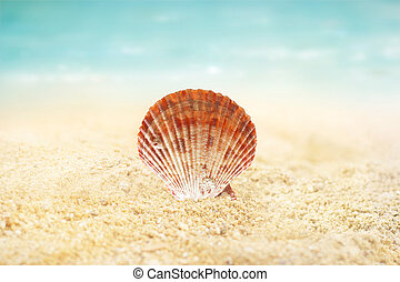 Shell on the sand beach summer background