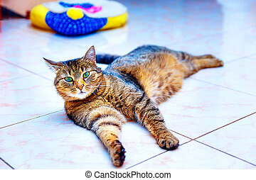 beautiful stripped cat lying down on a marmor floor. Eye...