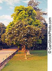 Southern magnolia grandiflora - Southern magnolia Magnolia...