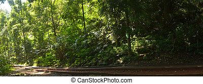 footpath  tropical