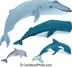 Set marine mammals. Blue whale, sperm whale, dolphin, orca....