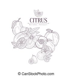 Fruit Still Life SEt Hand Drawn Realistic Sketch - Fruit...
