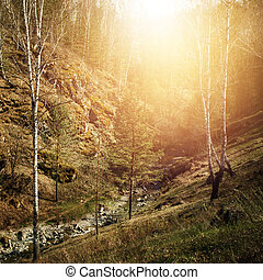 Mountain creek in a forest hills Nature background Image...