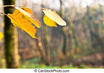detail of orange leaves in the forest, shallow depth of...
