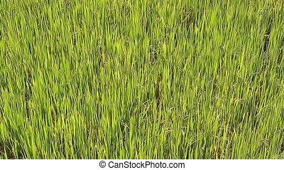 Beauty green grass close up
