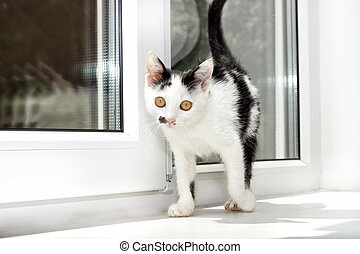 kitten on a window sill
