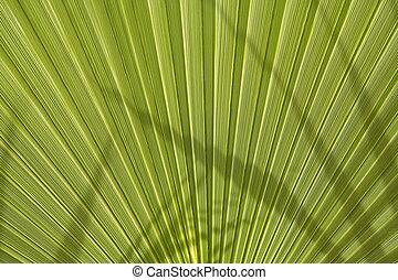 Palm leaf - Green palm leaf