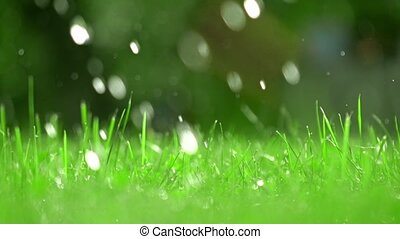 Green grass and falling drops of water, shallow focus. Super slow motion video, 250 fps