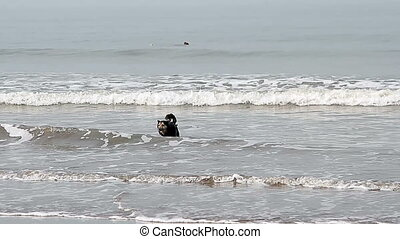Dog shake off on the coast near sea