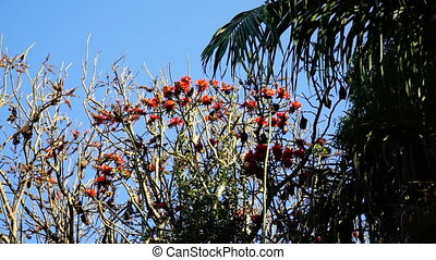 Bats hanging on tree with flowers - Bats hanging on bare...