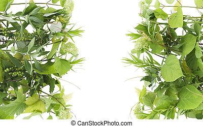 Green card concept - Fresh green runaways of various garden...