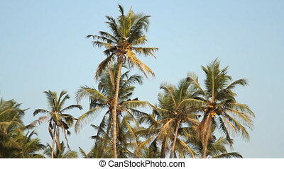 Palm trees over blue sky