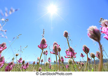 beautifu flowers under blue sky