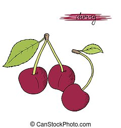 Hand drawn cherries with leaves.