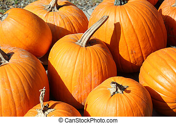 bright orange pumpkins - Bright orange pumpkins with stems...