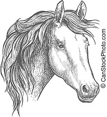 Horse head sketch of arabian mare - Arabian horse sketch of...