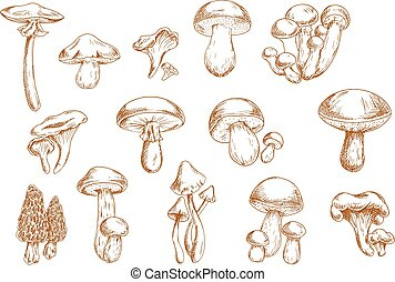 Edible mushrooms sketches for food design - Delicious edible...