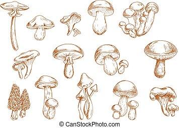 Edible mushrooms sketches for food design - Delicious edible...