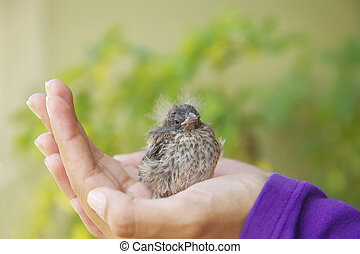 Little Bird Resting in the Girls Hand
