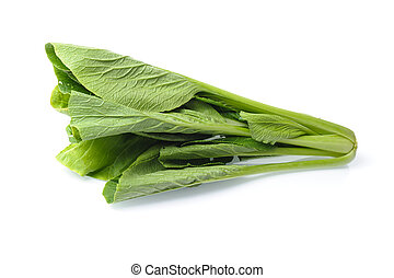 choy - green choy isolated on white background