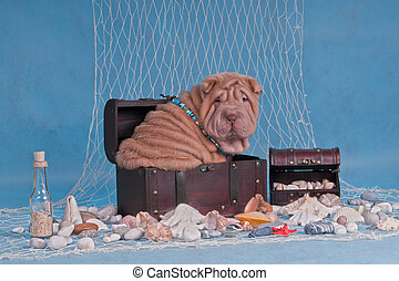 Pirates Treasures - Puppy in Pirates Treasures Trunk in...
