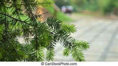 Pine branch on a background sledding horse tree branch in...