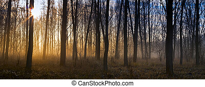 Misty forest at dawn, the rising sun.