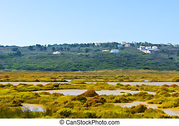 Swamp in Portugal - Swamp on the Shore of Atlantic Ocean in...