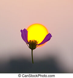 Sunset sun and flower - Image taken at sunset Selected...